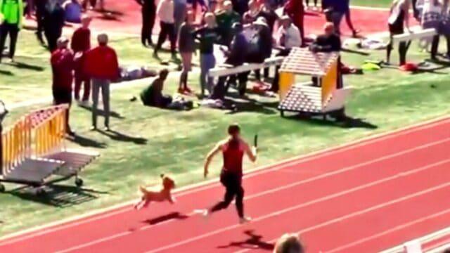 Σκυλάκι… παραλίγο να σπάσει το ρεκόρ του Μπολτ στα 100 μέτρα! (vid)
