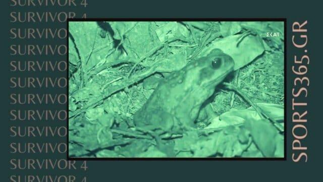 Survivor 4 Spoiler (18/05): Απλά δεν υπάρχει! Γουρλής ο βάτραχος που κατούρησε τον Ασημακό! (Vid)